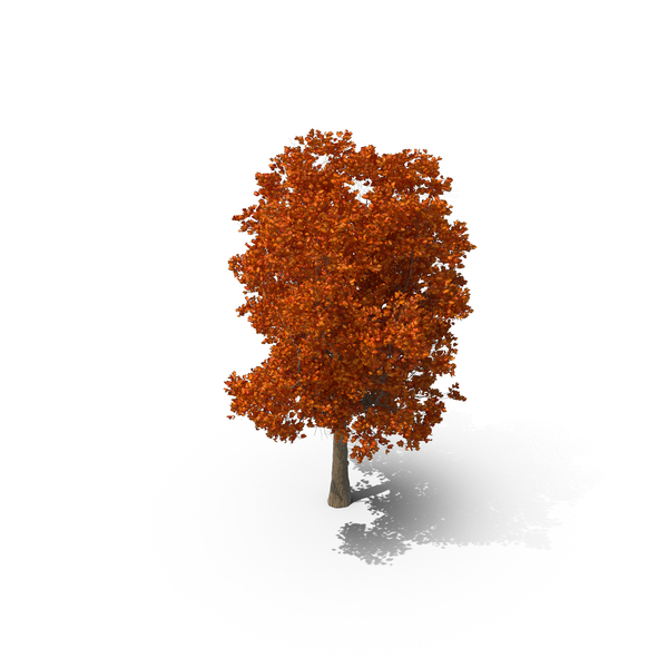 Autumnal Tree PNG & PSD Images