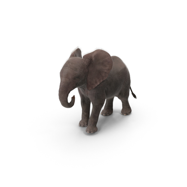Baby Elephant PNG & PSD Images