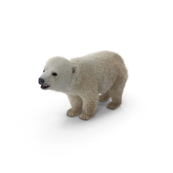 Baby Polar Bear PNG & PSD Images