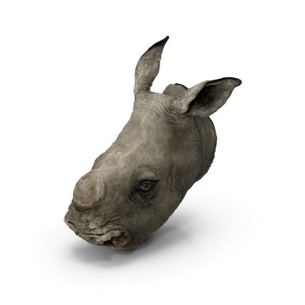 Baby Rhino Head PNG & PSD Images