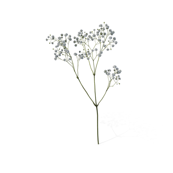 Baby's Breath PNG & PSD Images