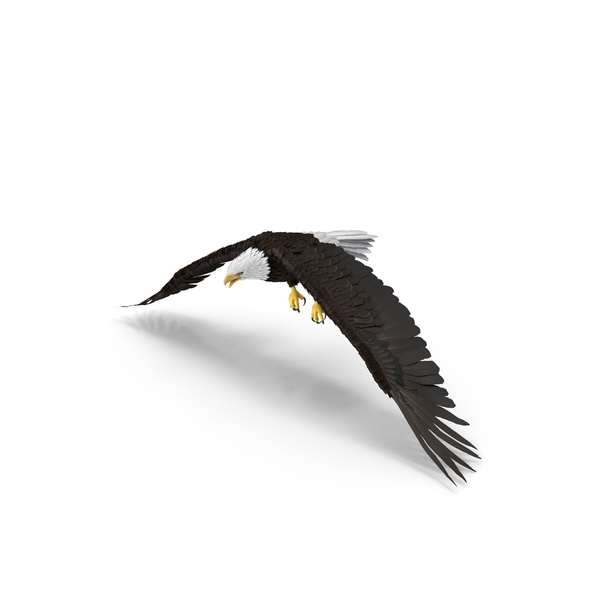 Bald Eagle Flapping Object
