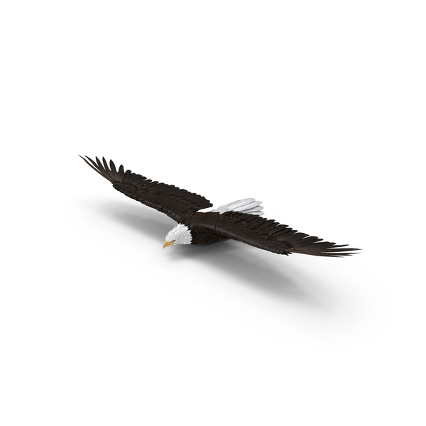 Bald Eagle Gliding Object
