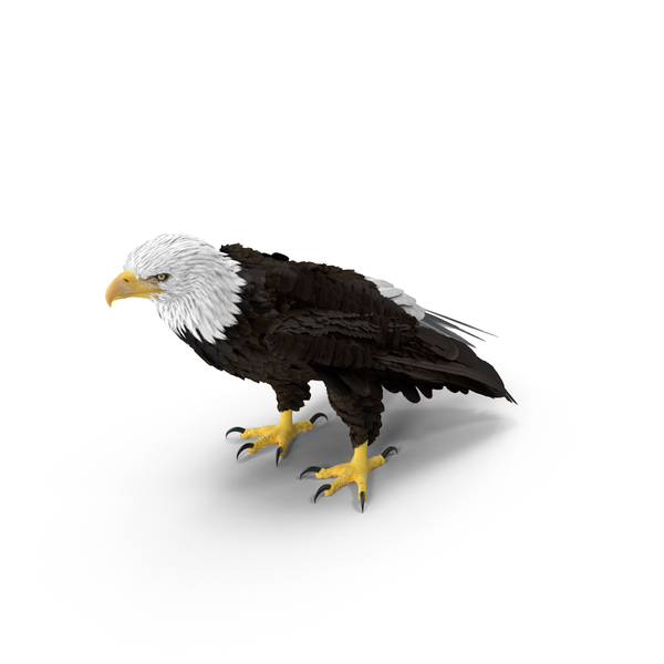 Bald Eagle Standing Object