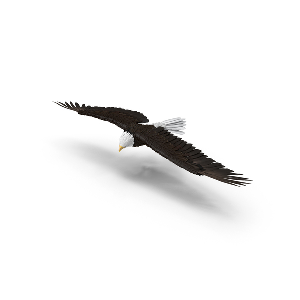 Bald Eagle Turning PNG & PSD Images