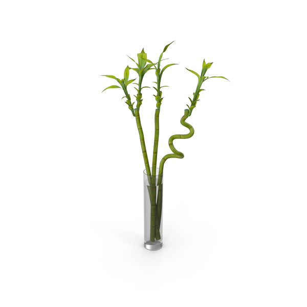 Bamboo Plant In Vase PNG & PSD Images
