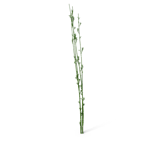 Bamboo Reed PNG & PSD Images