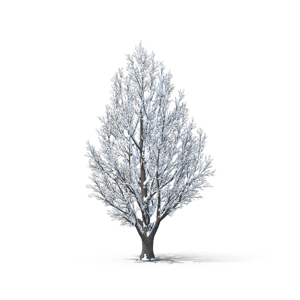 Bare Tree Covered in Snow Object