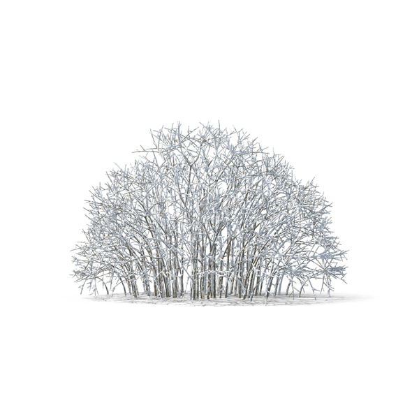 Deciduous: Bare Tree Covered in Snow PNG & PSD Images