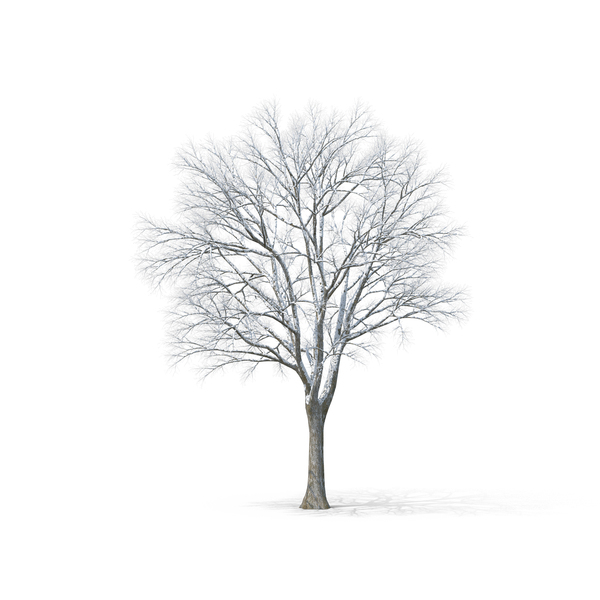 Bare Tree Covered in Snow PNG & PSD Images