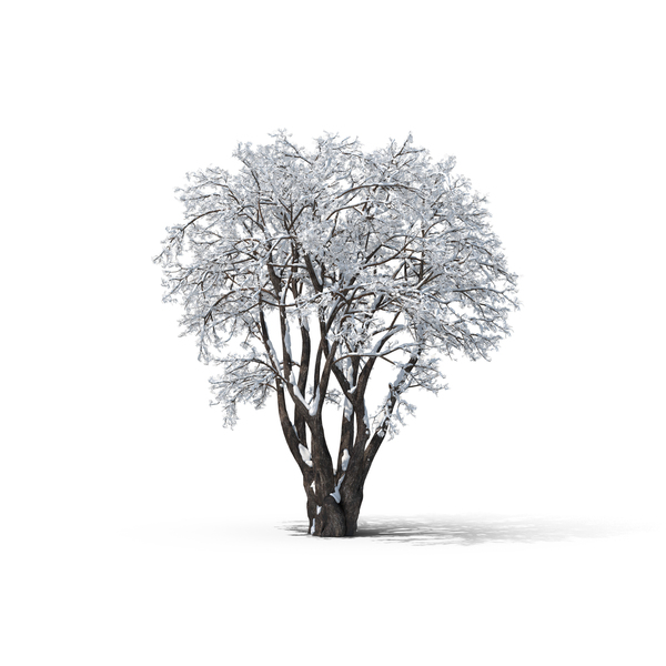 Deciduous: Bare Tree PNG & PSD Images