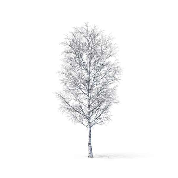 Bare Tree PNG & PSD Images