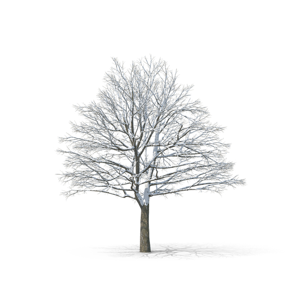 Bare Tree Object