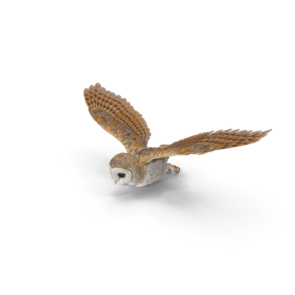 Barn Owl Flying PNG & PSD Images