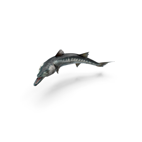 Barracuda Fish Object