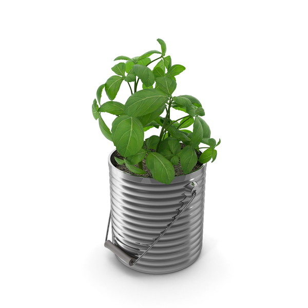 Basil Plant PNG & PSD Images