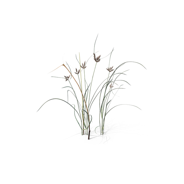 Flowering Plants: Bayonet Grass PNG & PSD Images