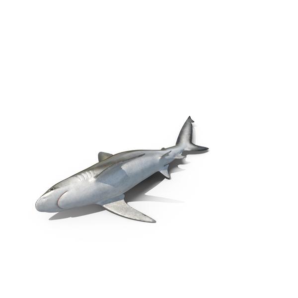 Beached Bignose Shark PNG & PSD Images