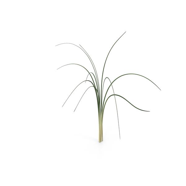 Flowering Plants: Bear Grass PNG & PSD Images