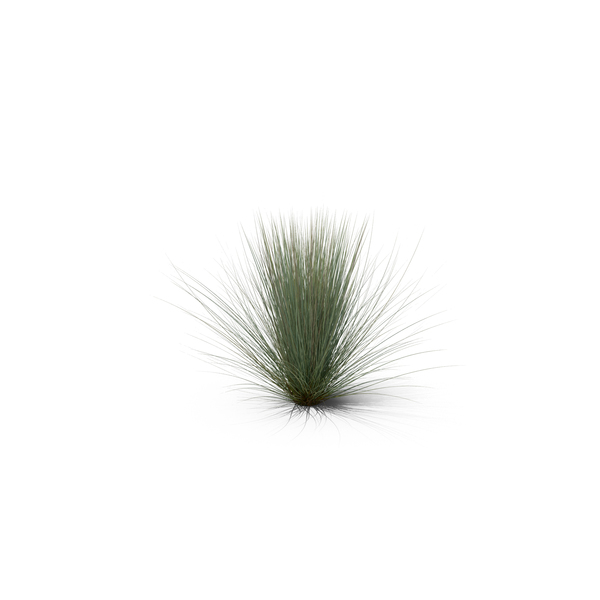 Grasses: Beard Grass PNG & PSD Images