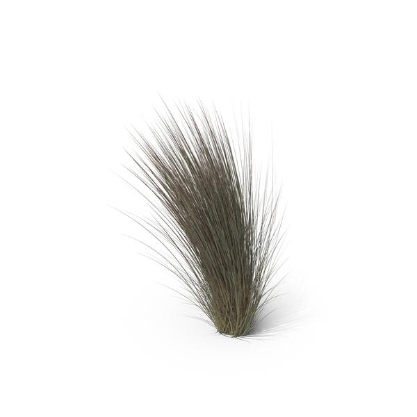Beard Grass PNG & PSD Images