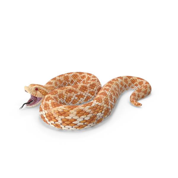 Beige Hognose Snake Attack Pose PNG & PSD Images