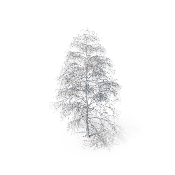 Birch Snow PNG & PSD Images