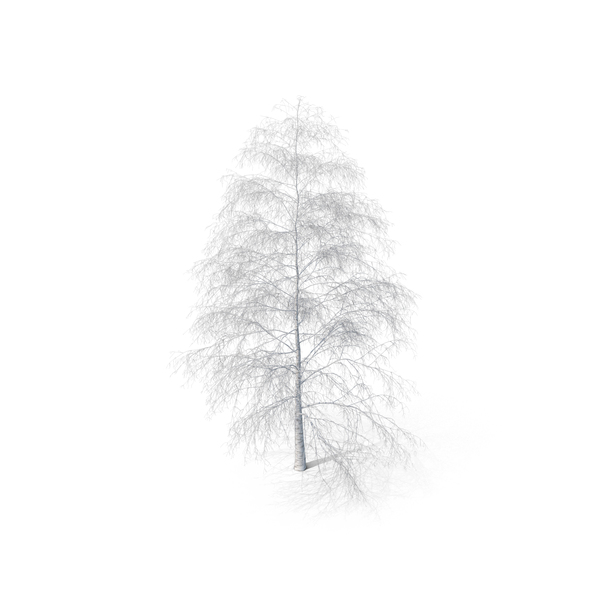 Birch Tree Winter PNG & PSD Images