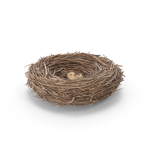 Bird Nest With Quail Eggs PNG & PSD Images