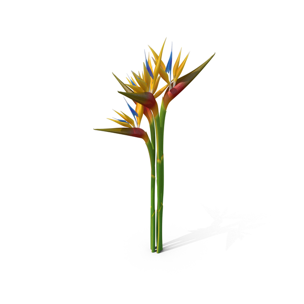 Bird of Paradise PNG & PSD Images