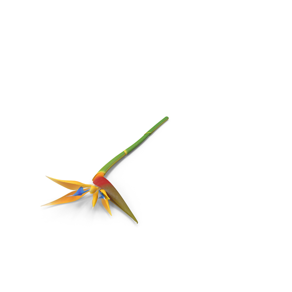 Bird of Paradise Flower PNG & PSD Images