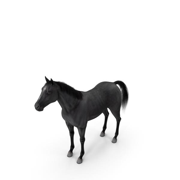 Black Horse Fur PNG & PSD Images