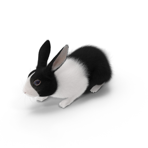 Black Rabbit Object