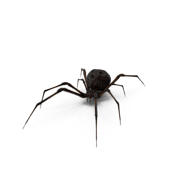 Black Widow Spider PNG & PSD Images