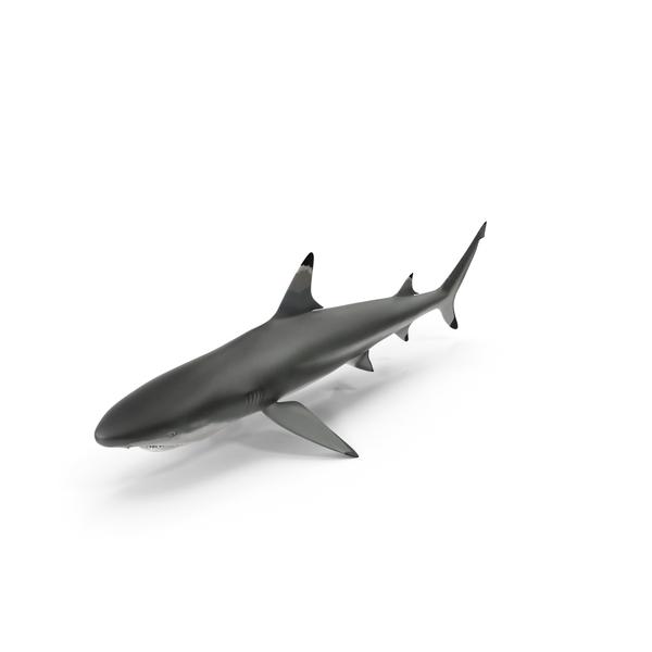 Blacktip Shark PNG & PSD Images