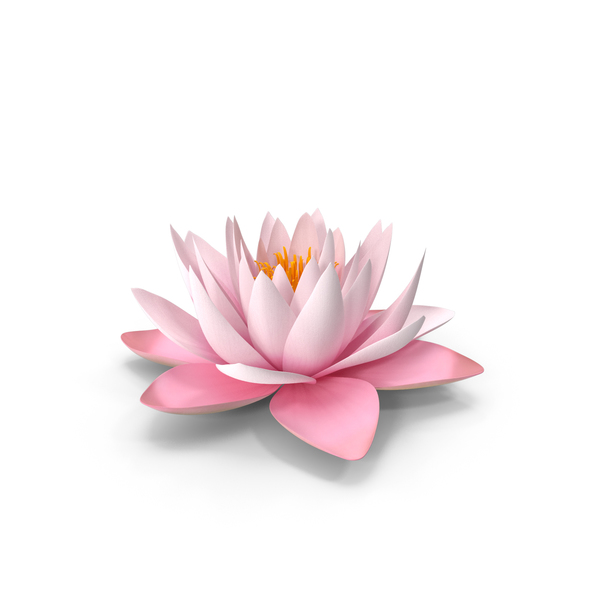 Blooming Nymphaea Colorado Pink Lily PNG & PSD Images