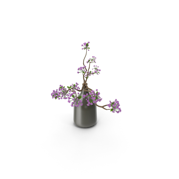 Blooming Sakura Branches in a Vase PNG & PSD Images