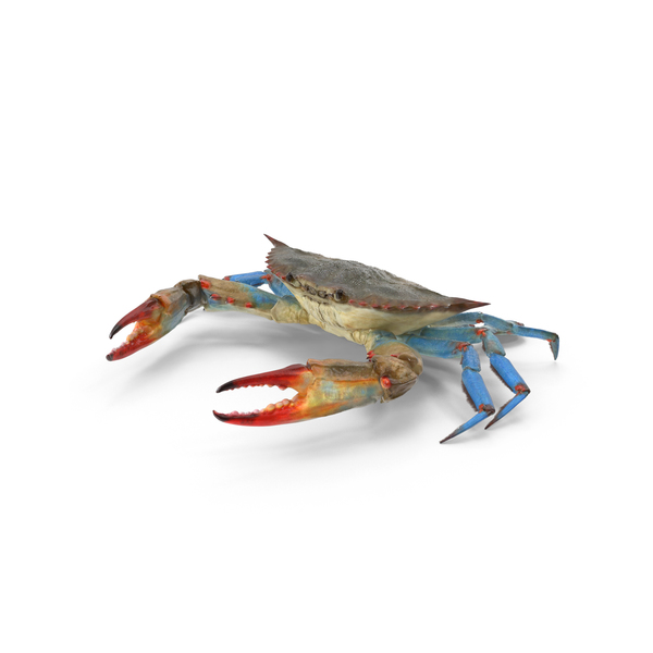 Blue Crab Object