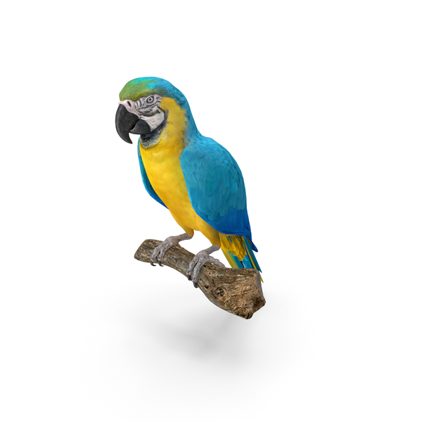 Blue Gold Macaw PNG & PSD Images