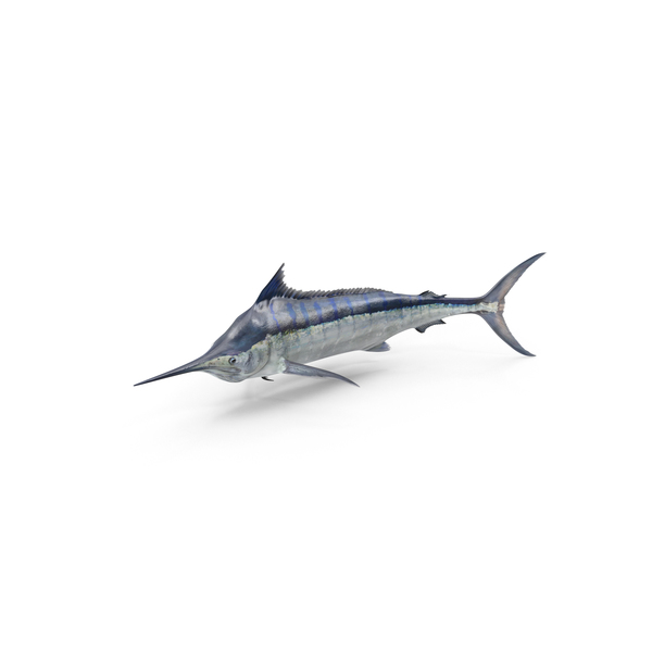 Blue Marlin Object