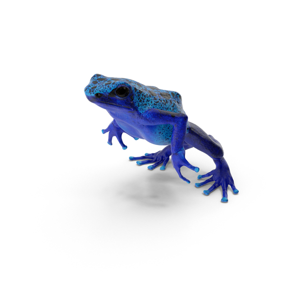 Blue Poison Dart Frog Jumping PNG & PSD Images