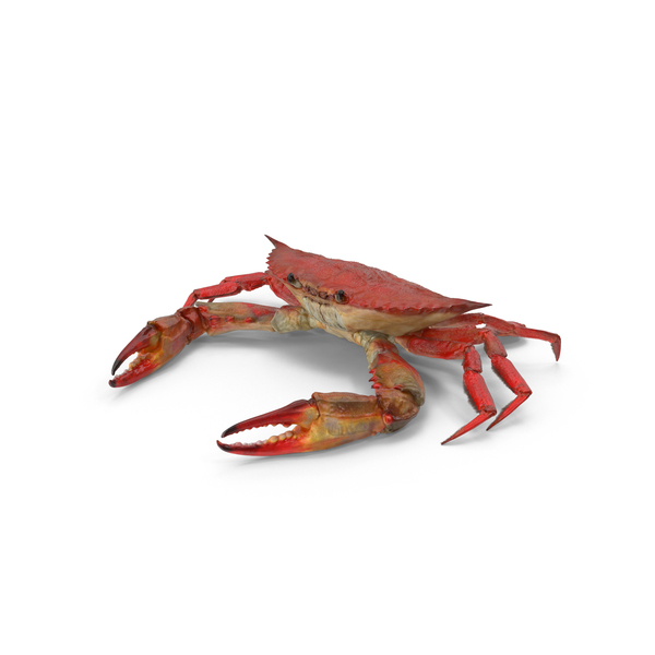 Boiled Blue Crab Object