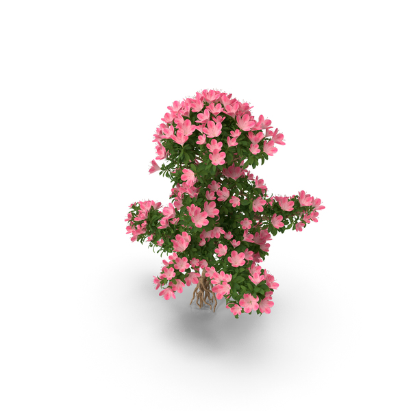 Bonsai Tree with Flowers PNG & PSD Images
