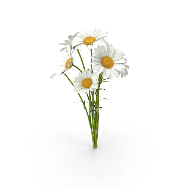 Bouquet of Chamomile Flowers PNG & PSD Images