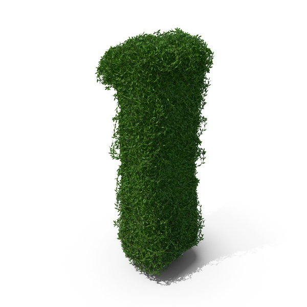 Boxwood Number One PNG & PSD Images
