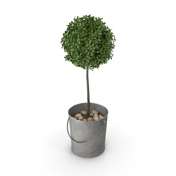 Boxwood Plant in a Bucket PNG & PSD Images