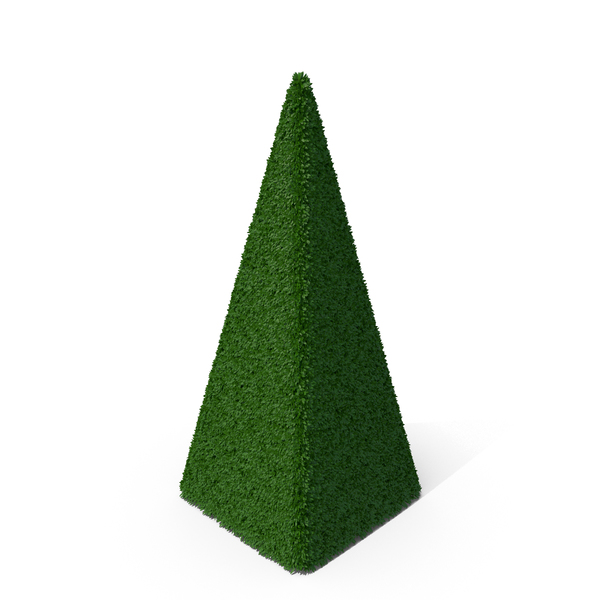Bush: Boxwood Pyramid PNG & PSD Images