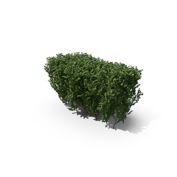 Boxwood Shrub PNG & PSD Images