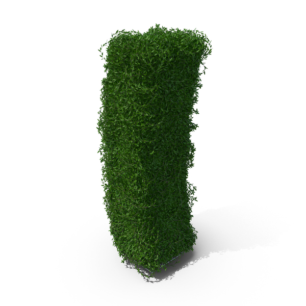 Topiary: Boxwood Symbol I PNG & PSD Images