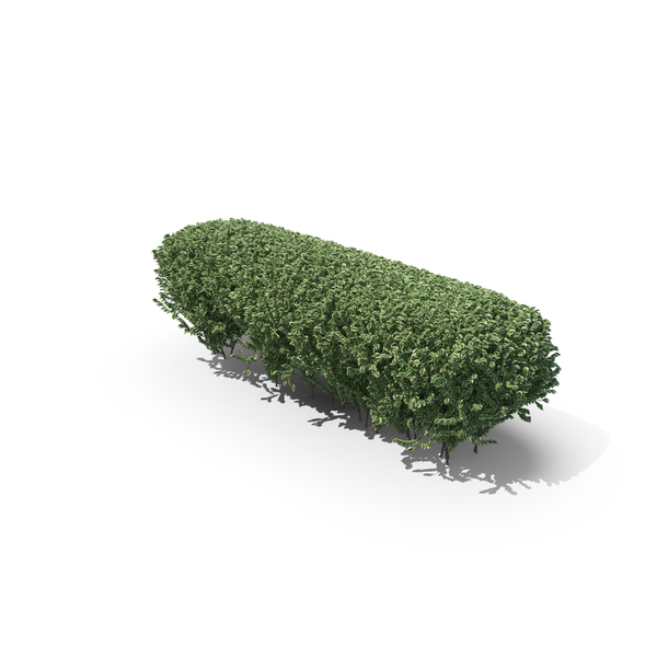 Boxwood Trimmed Hedge PNG & PSD Images